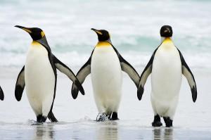 penguin-03